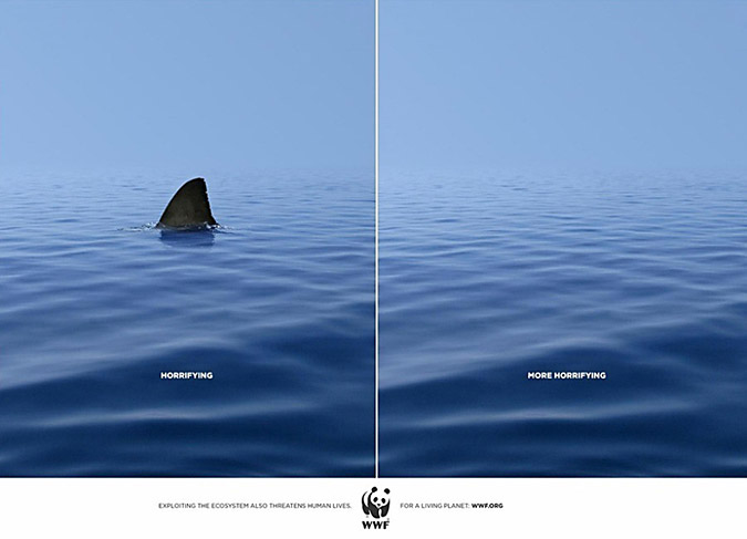 horrifying shark world wildlife federation