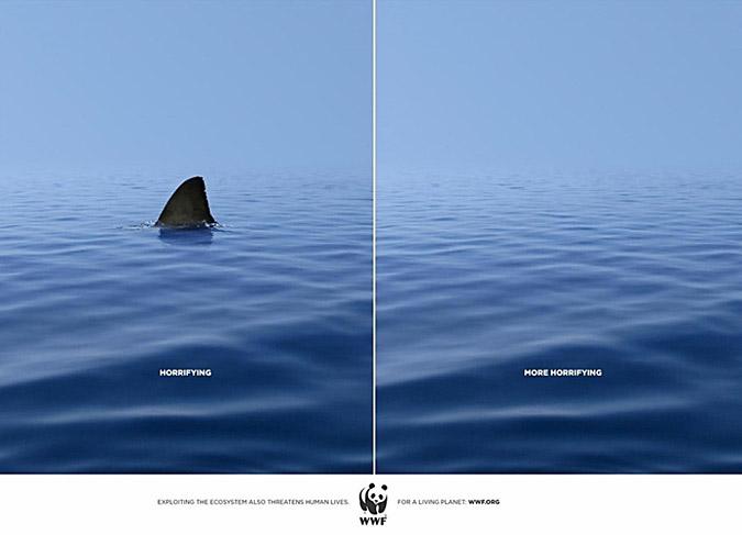 horrifying shark world wildlife federation