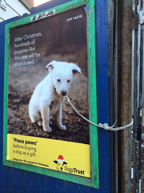 poster dog tied to post with real rope