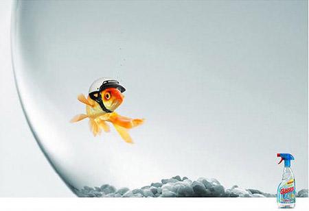 goldfish with helmet glassex