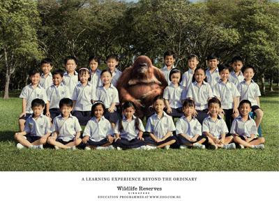 orangutan class photo for wildlife reserves