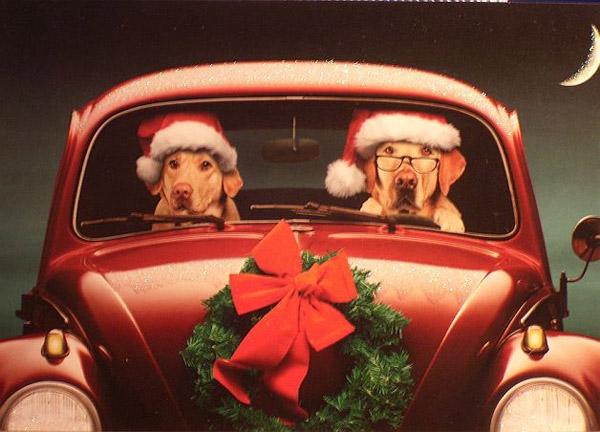 Dogs on Christmas Drive | Concept - THE BIG AD