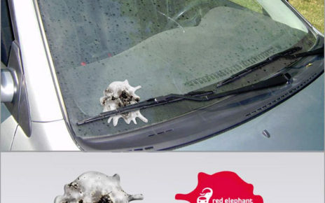 bird splat car window flyer coupon