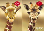 stuffed giraffe vs zoo visit