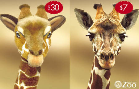stuffed giraffe vs zoo visit