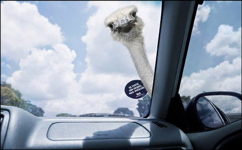 car windshield sticker marketing safari zoo osterich
