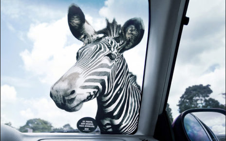 car window sticker marketing safari zoo zebra