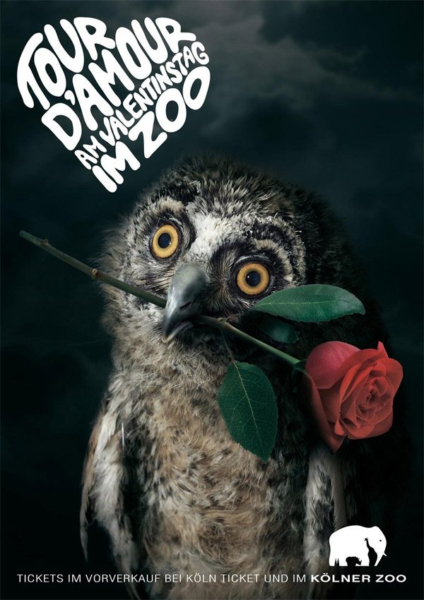 valentines at the zoo owl print ads