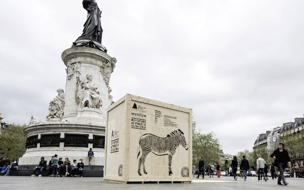 wild animal crates opened and dispersed around paris - zoo grand opening - zebra