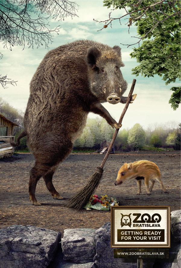 zoo animals preparing for your visit -hogs sweeping