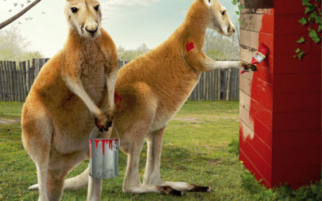 zoo animals working to get ready for your visit - kangaroos