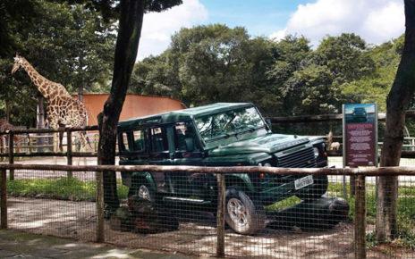 wild jeep exhibit at the zoo