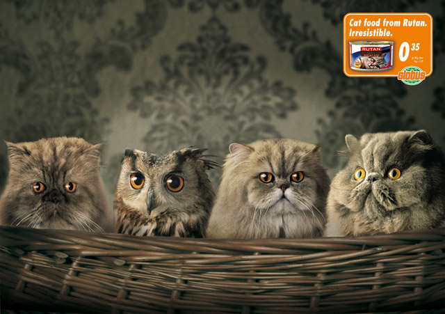 owl with funny cats - cat food ad